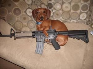 doggun